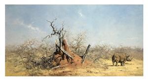 sleepy rhino by david shepherd