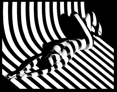 zebra 17 by francis giacobetti