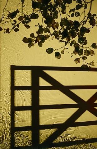 entrance by susan derges