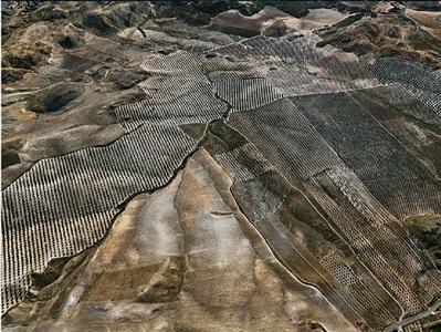 olive groves #3, jaen, spain, 2010 by edward burtynsky