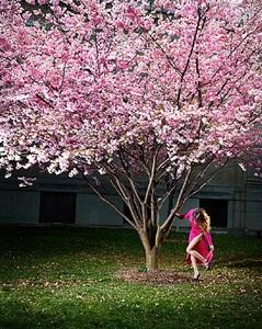 pink moment by david drebin