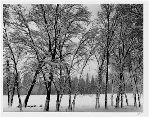 young oaks winter yosemite national park by ansel adams
