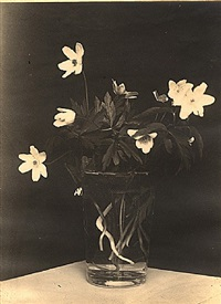 flowers (ostern) by ilse bing