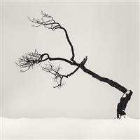 kusharro lake tree, study 6, kota, hokkaido, japan by michael kenna