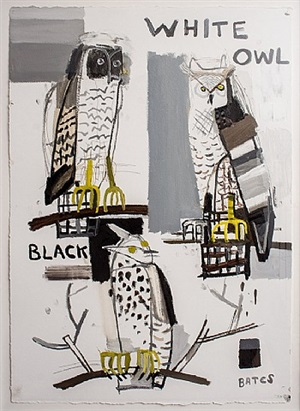 white black owl by david bates