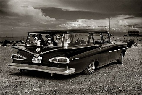 dogs in car by albert watson