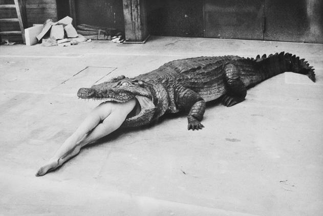 crocodile eating ballerina by helmut newton