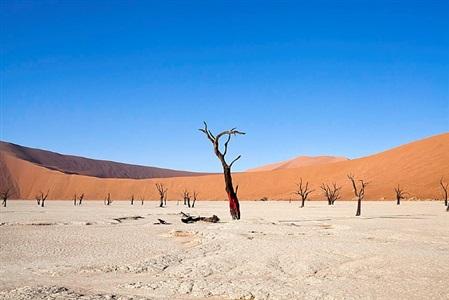 the bleeding tree - namibia by alfredo destéfano