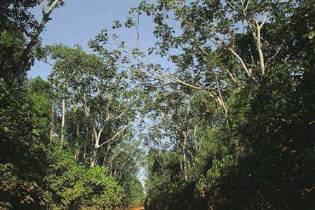 roads of amazonia 1 by sergio vega
