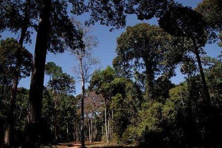 roads of amazonia 3 by sergio vega