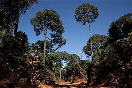 roads of amazonia 5 by sergio vega