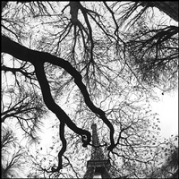 eiffel tower from tree by bruce davidson