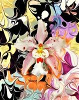 hollywood oncidium by christopher beane