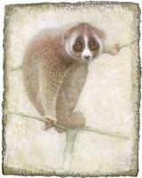 lemur by victor koulbak