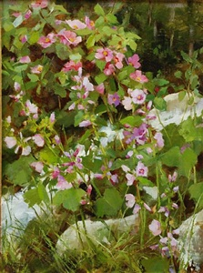 wild roses in the tetons by kathy anderson