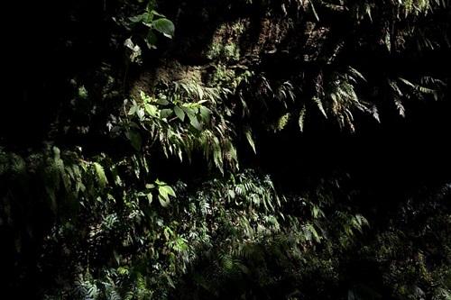 caravaggio's moss c by sergio vega