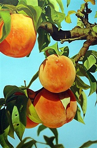 untitled (peach 1) by mustafa hulusi