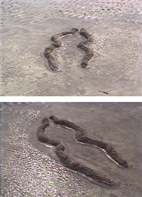 ochún (film stills) by ana mendieta