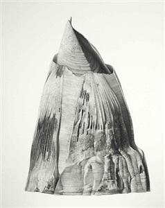 megabalanus coccopoma by jonathan delafield cook