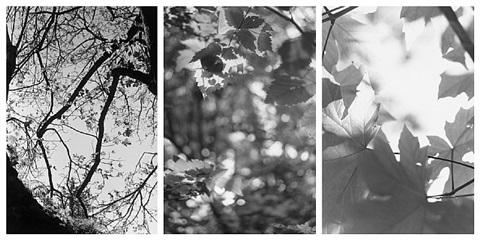 robert adams on any given day in spring and light balances by robert adams