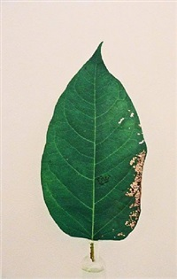leaf by janet malcolm