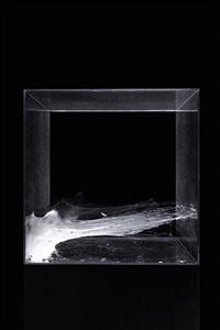 dorado 1 agelena labyrintica by tomas saraceno