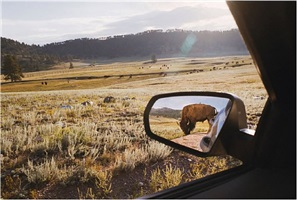 rearview mirror by rebecca norris webb