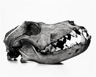 irving penn cranium architecture by irving penn