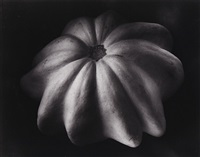 winter squash (33v) by edward weston