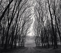 circle in trees, marly, france by michael kenna