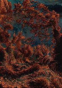 woods, lovely, dark, and deep by mark innerst