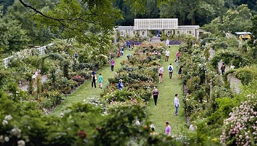 brooklyn botanical garden by susan wides