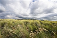 hawaii, big sky series by barbara alper