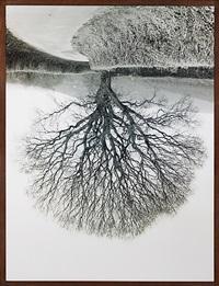 welsh oaks #1 by rodney graham