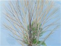 winter maple by sylvia plimack mangold