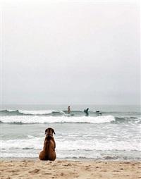 beach dog, montauk, ny by michael dweck