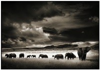 elephant herd by nick brandt