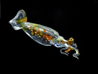 untitled (squid larvae) by alexis rockman