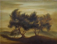 olive trees by robert mcintosh