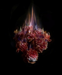 fading memories of the sun by mat collishaw
