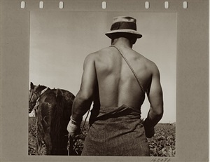 spring plowing, guadalupe, california by dorothea lange