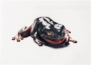 frog after eating a praying mantis by catherine chalmers