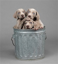 too many by william wegman
