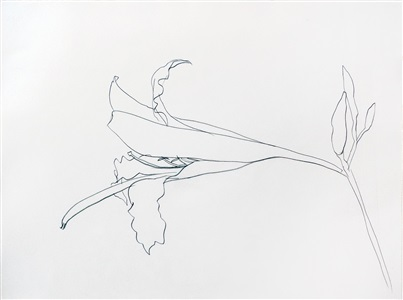 four decades drawings and works on paper by ellsworth kelly