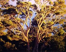 sunset, native koa trees, hawaii by christopher burkett