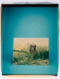 landscape portrait by william wegman