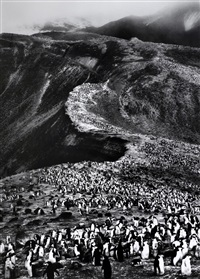 penguins, antarctica, 2005 by sebastião salgado