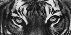 study of tiger eyes by robert longo