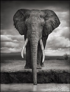 nick brandt on this earth, a shadow falls by nick brandt