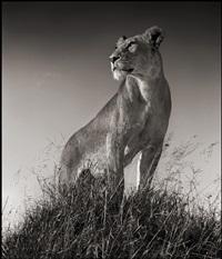 lioness on mound, serengeti by nick brandt